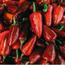 πιπεριές φλωρινης