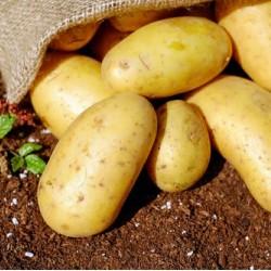 Πατάτες Καλαμάτας