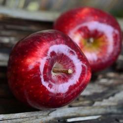 Μήλα κοκκινα